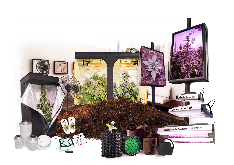 Cultiver du cannabis en intérieur | Infos culture | Dutch Passion