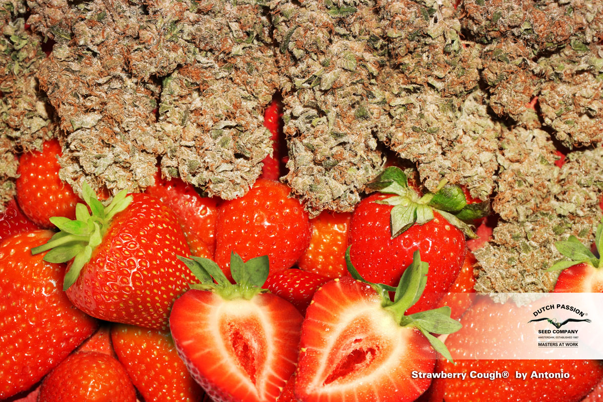 Strawberry Cough with strawberries