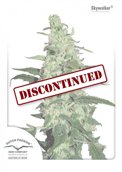 Skywalker graines de cannabis f minis es achat for Graine de cannabis interieur