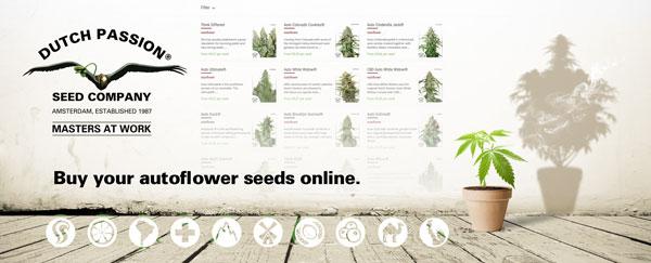 Buy autoflower seeds here