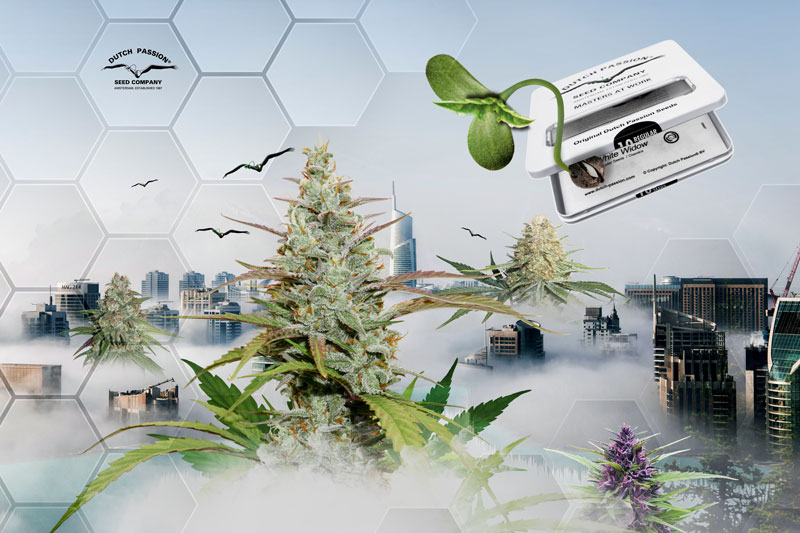 cannabis-of-the-future