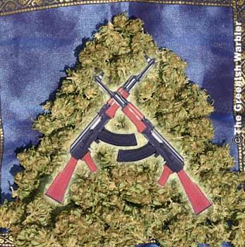USA: Rhode Island Judge Rules Medical Marijuana Growers Can Have Guns.